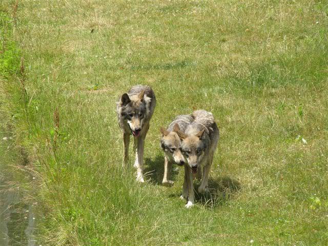 loups-chateau-nantes