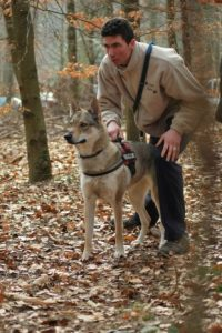 relations-loup-humain-chien