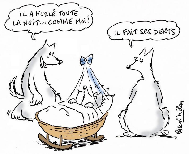 humour-lupin-3