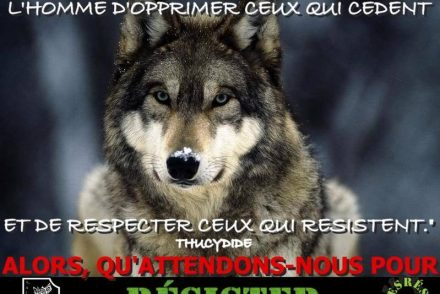 loup-resister