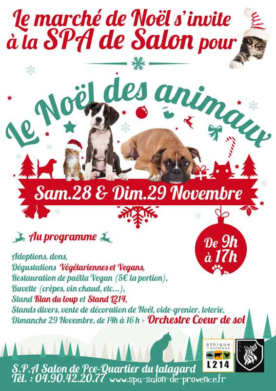 kdl-noel-animaux-spa-salon-pce