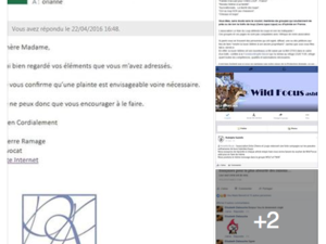 Copies écrans association Entre Chiens et Loups