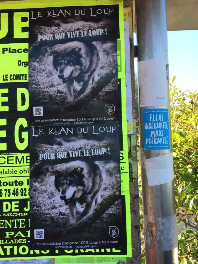 klan-loup-affichage-10-162