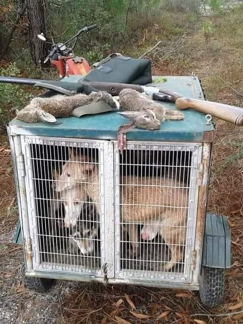 ecologistes-fete-morts