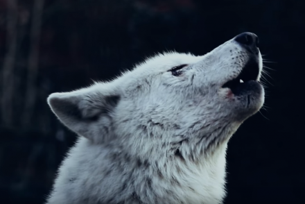 the-wolf-song