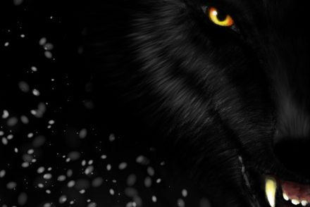Wolf-Obsydienn-Graphics